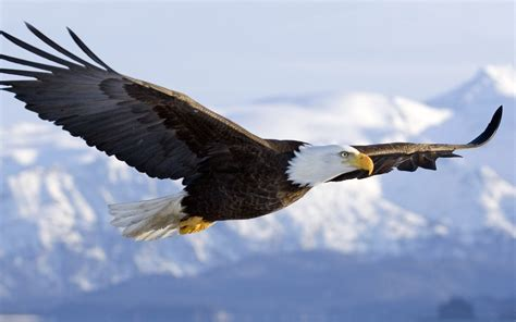 7 Highly Effective Habits Of Eagles  Pgcps Mess Reform