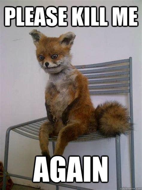 Taxidermy Fox Meme - please kill me again taxidermy the fox freaky taxidermy pinterest taxidermy memes and meme