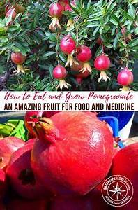 Jewish New year fruit may hold seeds of hope for brain