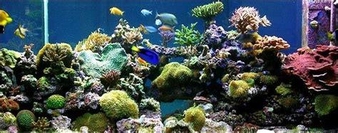 aquarium air tawar pesona keindahan blog akvodecorcom