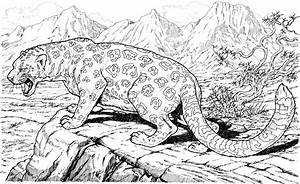 Animal Coloring Pages For Adults Bestofcoloringcom