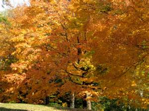 trees fall colors free images at clker vector clip royalty free domain