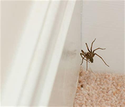 araignee dans la maison araign 233 es de maison gardez le contr 244 le