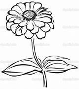 Zinnia Flower Coloring Drawing Pages Sketch Printable Getcolorings Getdrawings sketch template