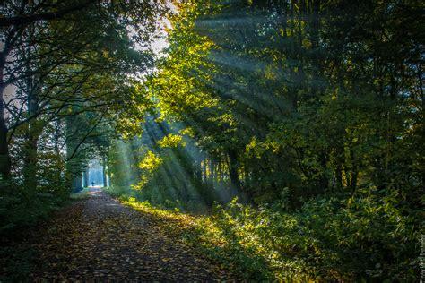 gratis afbeeldingen landschap boom natuur bos