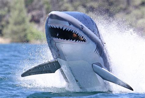shark submarine   people