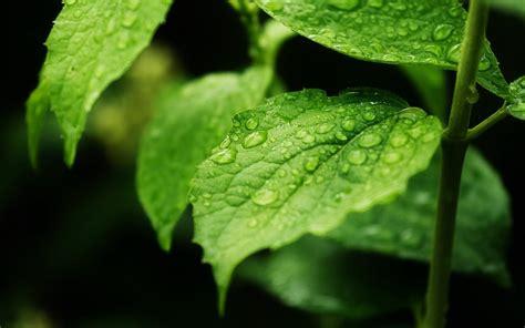 2017绿色保护眼睛的高清桌面壁纸 护眼绿色电脑桌面背景图 - www.xjj7.com,xjj6789.com ...