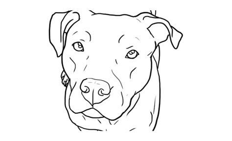 pitbull clipart outline pitbull outline transparent
