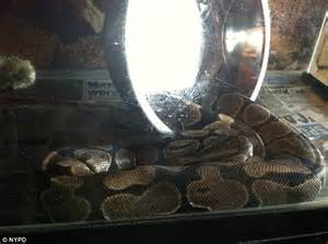 Police Discover Creepy Stash Of Snakes, Alligators And Spiders In New York Apartment Chapin Apartments Stony Brook Babylon Apartment Complex Mima Nyc Soundproofing Ceilings In Issaquah Washington Themes Decor Luxury Capitol Hill Seattle Friends Door
