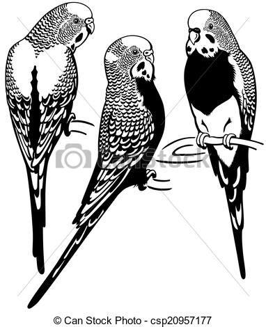 budgerigar parakeet clipart   cliparts