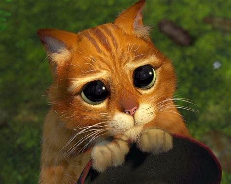 Pussy Cat Meme - pussy cat shrek meme generator