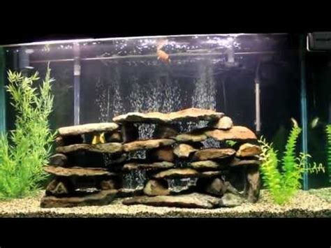 african cichlid  gallon tank rock formation fish tanks