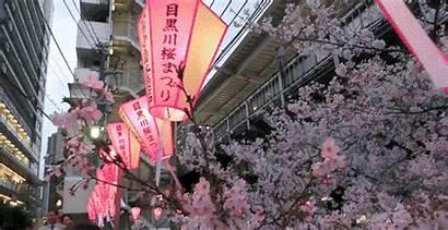 Japan Cherry Tokyo Hanami Blossoms Blossom Nakameguro