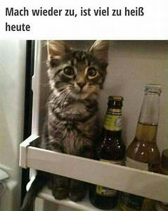 Was Brauchen Katzen : k tzchen brauchen auch abk hlung katzen lustiges und ~ Lizthompson.info Haus und Dekorationen