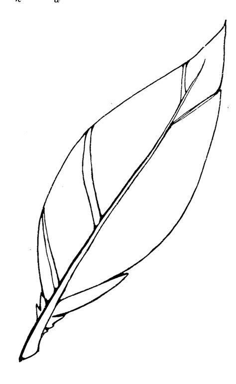 turkey feather clip art  clipartioncom
