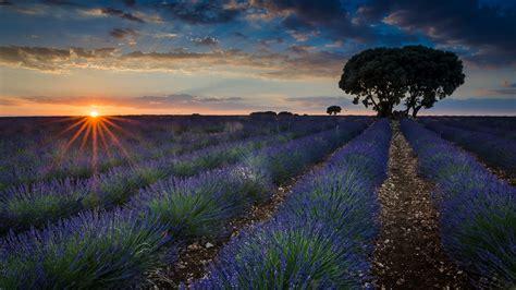 Desktop Wallpaper by Sunset Fields With Lavender Brihuega Guadalajara Province