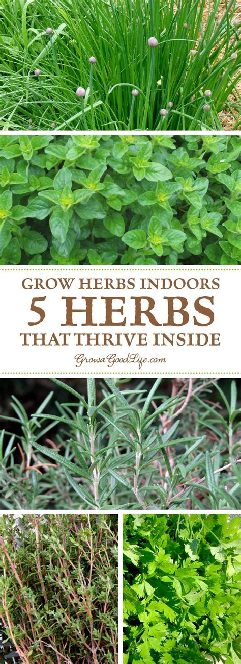 Growing Herbs Inside by Growing An Indoor Herb Garden During Winter Can Be