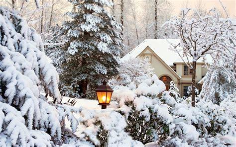 bureau dyk bomen en struiken met laag sneeuw mooie leuke