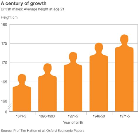 Men's Average Height 'up 11cm Since 1870s'  Bbc News