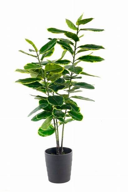 Artificial Ficus Rubber Plant Indoor Potted Tree