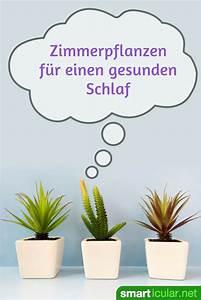 Zimmerpflanzen Für Schlafzimmer : besser schlafen mit zimmerpflanzen f r gute luft im ~ A.2002-acura-tl-radio.info Haus und Dekorationen