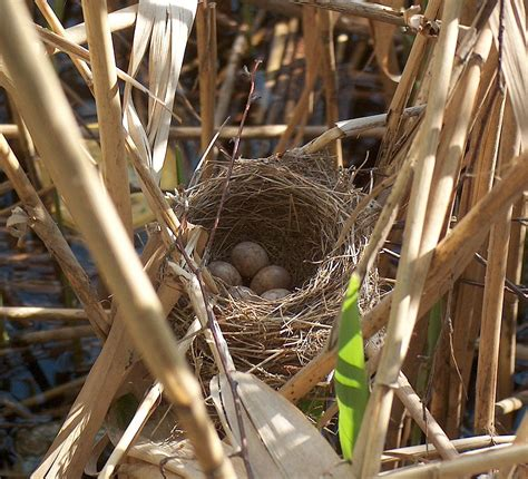 nest and egg identification resources the infinite spider