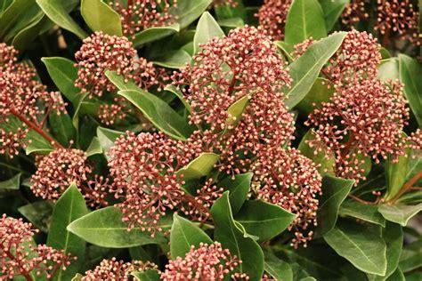 Topfpflanzen Für Den Garten by Winterpflanzen F 252 R Balkonk 228 Sten 16 Sch 246 Ne Winterblumen