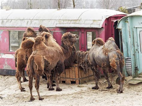 netherlands zoos dutchreview dierentuinen eric source wiki zoo
