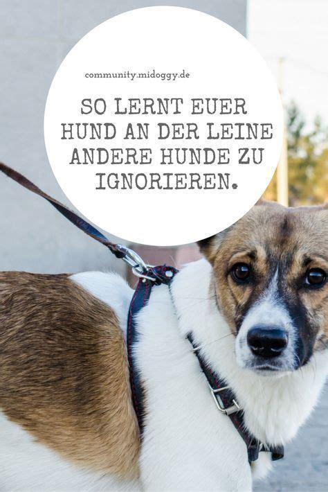 Glueckliche Haustiere Sauberkeit Und Erziehung by Wie Lernt Mein Hund Andere Hunde Zu Ignorieren Mit Leine