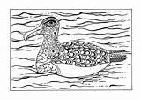 Albatross sketch template