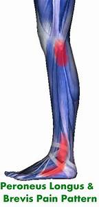 Peroneus Longus  Foot Pain And Muscle On Pinterest
