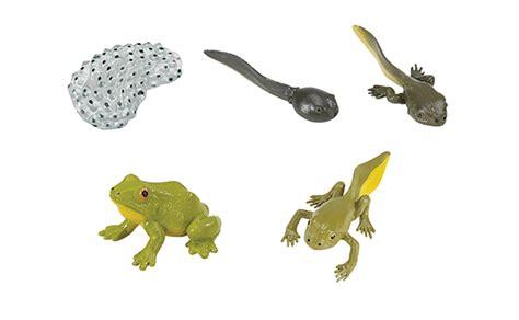 fournitures de bureau pour particuliers cycle de vie de la grenouille brault bouthillier
