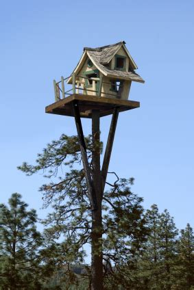 way up high tiny tree house