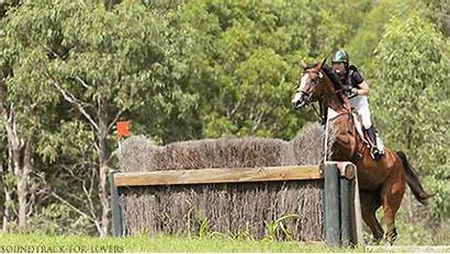 Country Cross Horse Horses Jumps Majestic Training