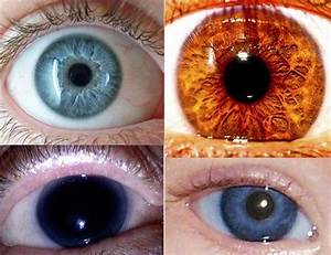 Shades Of Green Eyes Chart Best 25 Eye Color Charts Ideas On Pinterest Baby Eye