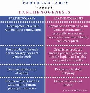 Difference Between Parthenocarpy And Parthenogenesis