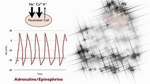 Blood Pressure Graph 046 How Adrenaline And Acetylcholine Affect Heart Rate