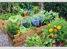 Декоративный огород как сделать красивые грядки Дом Мечты