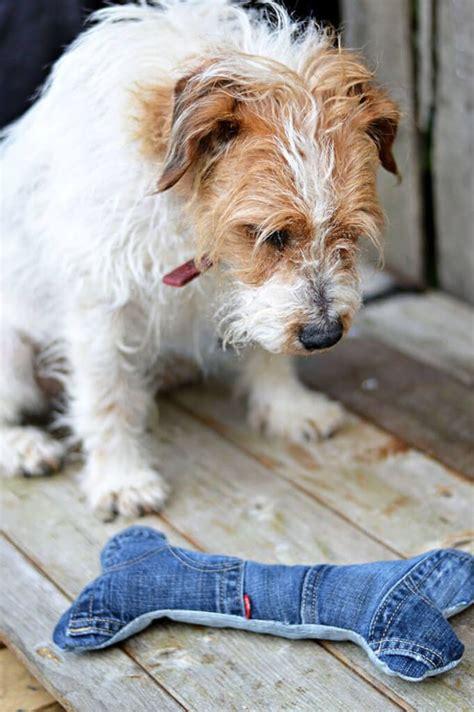 Futter Für Alte Hunde Selber Machen