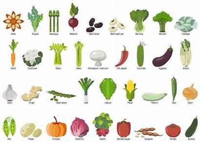 Vegetables Vegetable Clip Fruit Clipart Drawing Elements