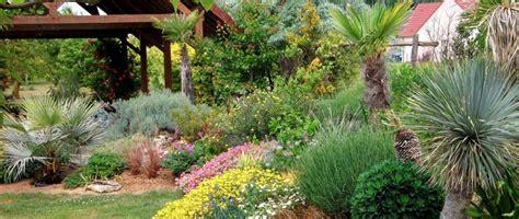 plante exterieur toute saison expedition de palmier plante exotique et d arbuste