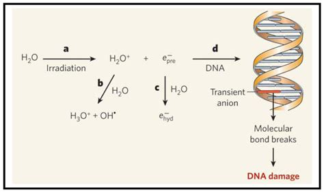 Gold Nanostructures As A