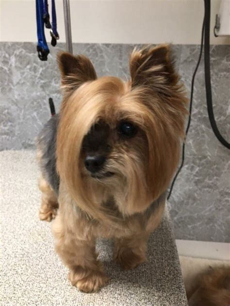 how much is a haircut at petsmart this showed up to petsmart and asked to speak to the
