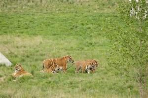 The Wild Animal Sanctuary   Colorado.com