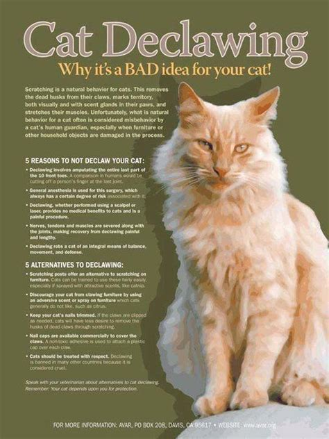 declawing cat cats bad why declaw kitten idea never kittens facts behavior million would years care don nails paws animals
