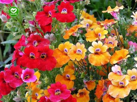 Dārza ABC - Vasaras puķes