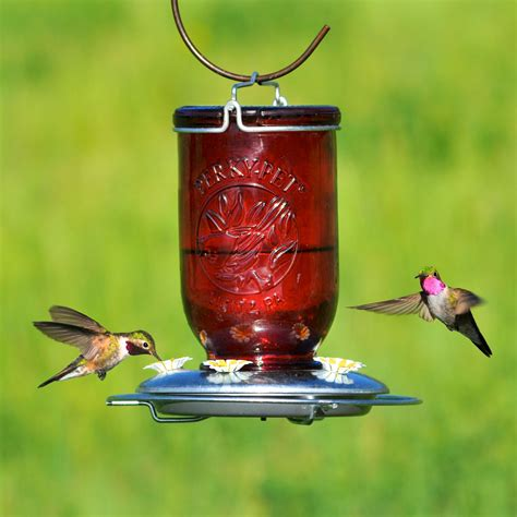 best hummingbird feeder pet 174 jar glass hummingbird feeder model