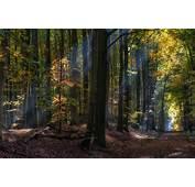 Nature Landscape Fairy Tale Forest Sun Rays Sunlight