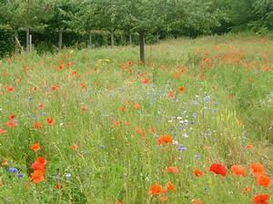 Champ de fleurs sauvages photo de giverny 2009 crea d39isa for Ou acheter le tapis champ de fleurs