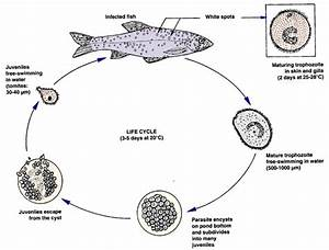 Management For Freshwater Fish Culture